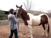 Amateur Girl Adore To Play With Horses